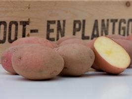 Alouette Aardappel Pootgoed