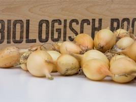 Santero Plantuien Biologisch plantgoed