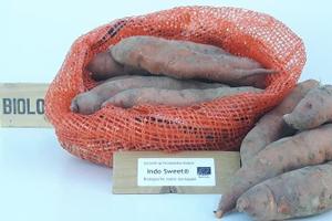 Zoete aardappel 'Indo Sweet' Bio Consumptie